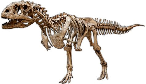 paleontologia  es carrera famosos  algo mas