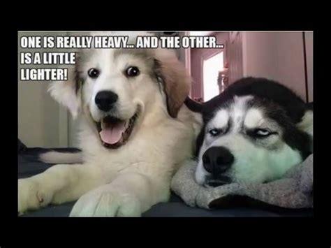 bad puns dog memes  youtube