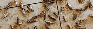 Unterschied Maus Ratte : mottenbek mpfung wichtiges ber die bek mpfung von motten ~ Lizthompson.info Haus und Dekorationen
