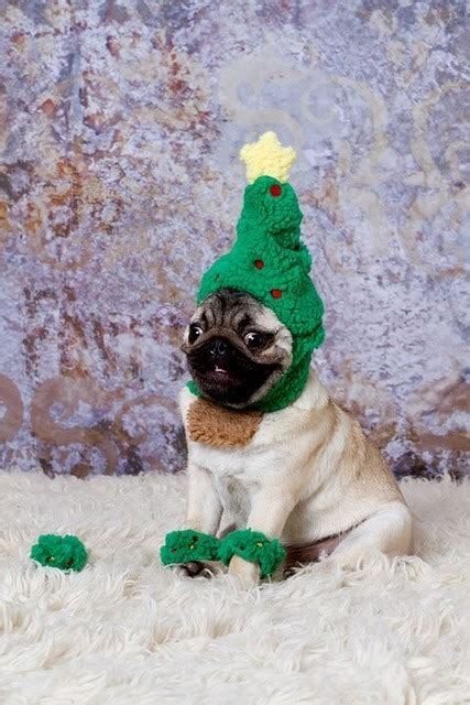 pug christmas tree tree the lovely lifestyle