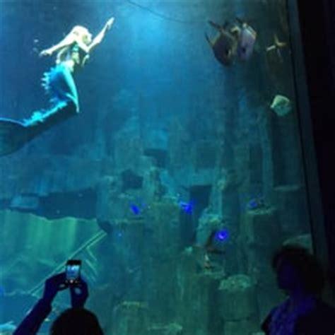 aquarium de cin 233 aqua 55 photos aquariums trocad 233 ro i 233 na reviews yelp