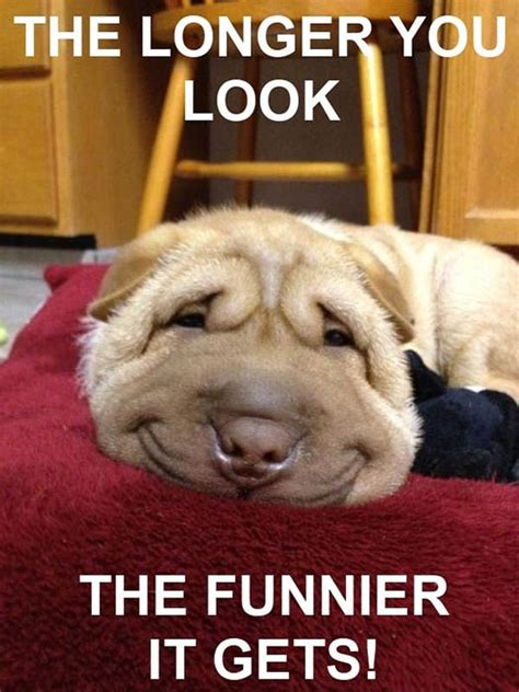 funny dog pictures  wow style