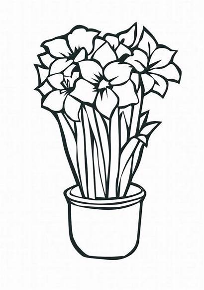 Coloring Flowers Flores Colorear Dibujos Tropical Flower