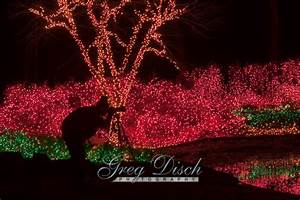 Garvan Gardens Springs Ar Christmas Lights How To Photograph Holiday Lights Greg Disch Photography