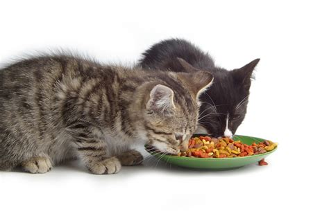 feed  cat