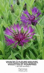 Les Plantes Vivaces Fleurs Mauves Violettes Ou Pourpres