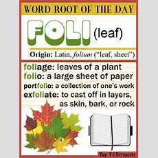"Vocabulary Help Word Root ""foli"" (leaf)  Language, Activities And Charts"