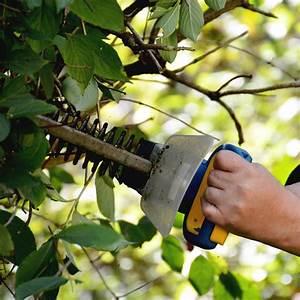 Bäume Schneiden Wann : b ume richtig schneiden b ume richtig pflegen und ~ Lizthompson.info Haus und Dekorationen