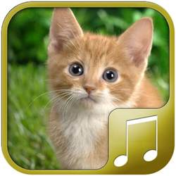 cat and sounds cats sounds appstore for android