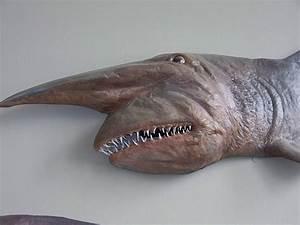 Goblin Shark | Animal Unique