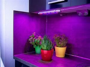 Pflanzen Led Licht : lunartec led pflanzenunterbauleuchte mit rot blau lichtkombination 520 lumen ~ Markanthonyermac.com Haus und Dekorationen
