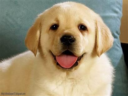 Screensavers Dog Dogs Puppy Wallpapers Wallpapersafari