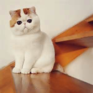 snoopy cat 46 best images about pet on cats cutest dogs