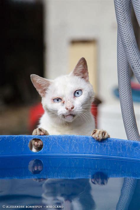 une vie de chat au japon en   editions issekinicho