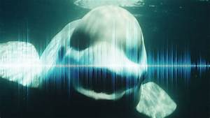 5 Creepiest Sounds In The Ocean Ever Recorded