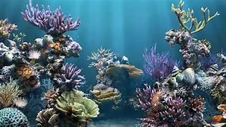 HD Aquarium Backgrounds 1080p  Coral Reef Wallpaper 1920x1080