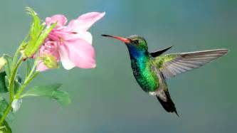 Southern Living Kitchen Ideas Bring Feathered Friends To Your Garden With These Hummingbird Facts Southern Living