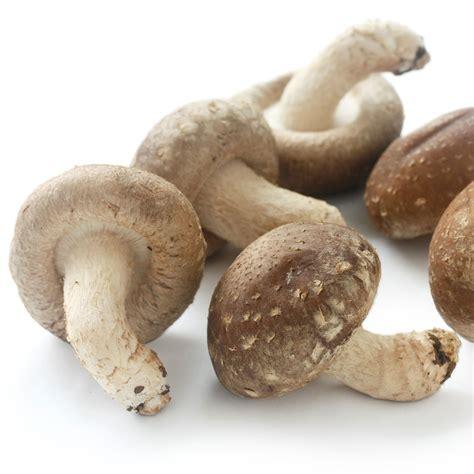 Shiitake Pilze Im Garten by Shiitake Pilz Fertigkultur Kaufen Bei Ahrens Sieberz