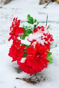 Blumen Im Winter : red k nstliche blumen im winter mit schnee bedeckt stockfoto colourbox ~ Eleganceandgraceweddings.com Haus und Dekorationen