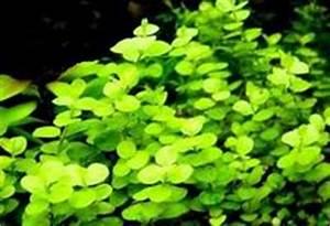 Wasserpflanzen Teich Kaufen : kauf von wasserschnecken ~ Michelbontemps.com Haus und Dekorationen
