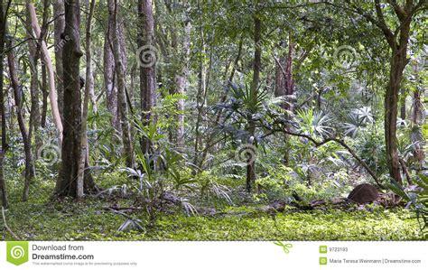 guatemala jungle stock  image