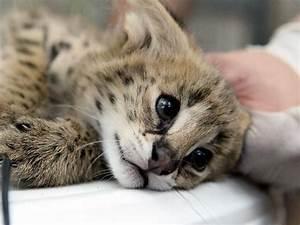 Pin by Sofi Wen on Bigcats | Pinterest