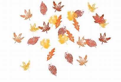 Coisas Simples Amo Leaves Autumn