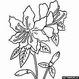 Coloring Wvu Mountaineers Sketch Rhododendron Flower Template Flowers Templates sketch template