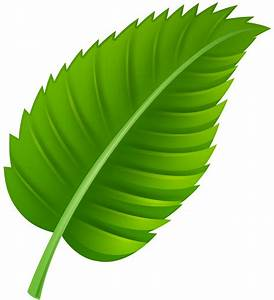 Green leaf clipart - Clipground