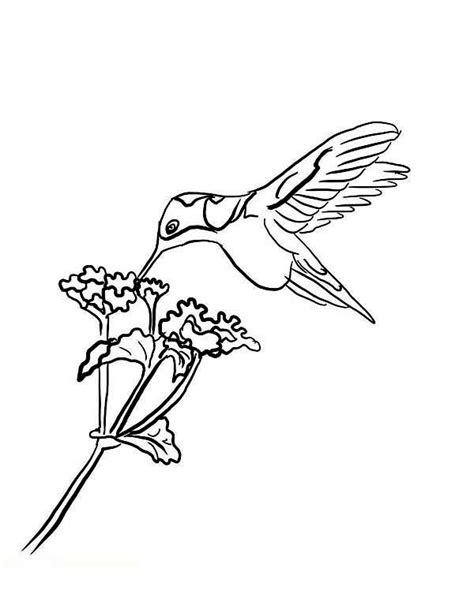 Hummingbirds With Flowers Coloring Pages Lot Hummingbirds