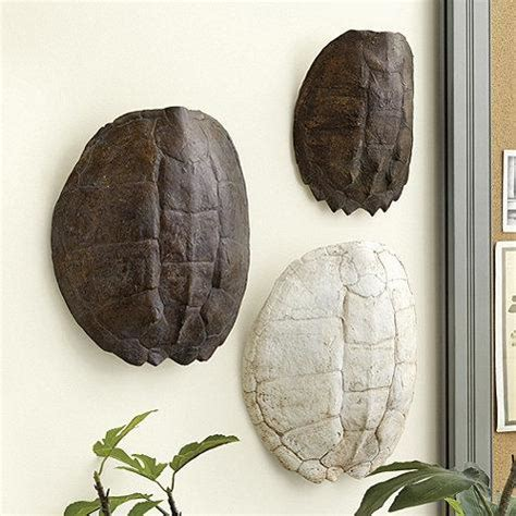 turtle shell plaque  brown  white