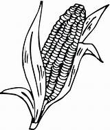 Corn Cob Coloring Stalk Stalks Indian Drawing Pages Printable Clipart Cartoon Plant Ear Cliparts Clip Freecoloringpagefun Gem Getdrawings Clipartmag Library sketch template