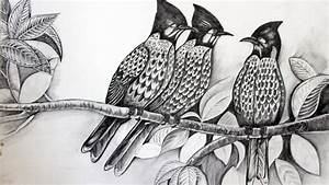 Draw Birds Sketch with Pencil full video Hindi ...