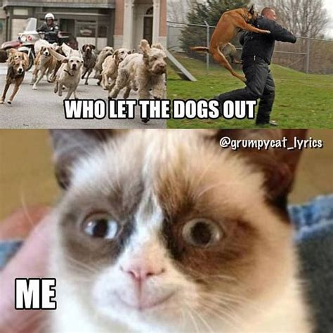 Who Let The Dogs Out Grumpy Cat Quotes Pinterest