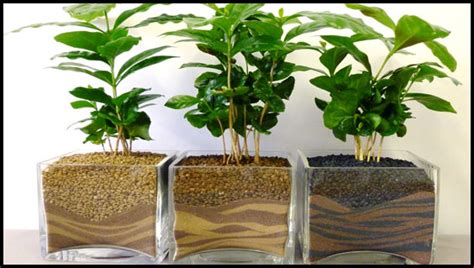 les plantes 224 offrir le garrit