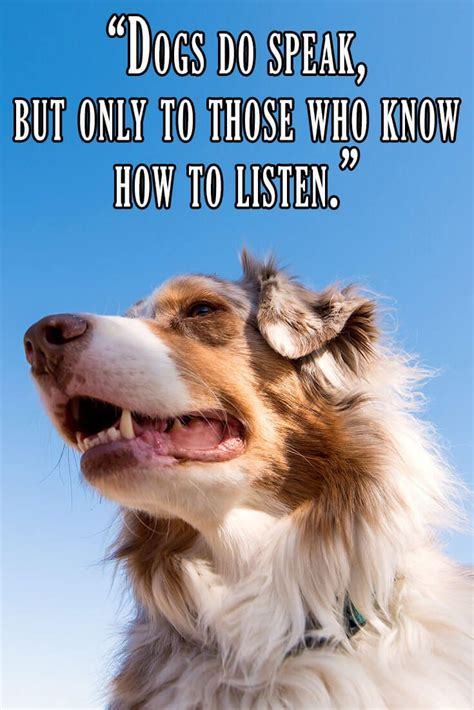 quotes  famous people   dog lovers  relate