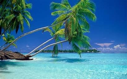 Palm Trees Tropical Beach Summer Water Landscape