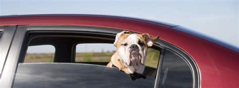 hund im auto transportieren hund im auto tiere richtig transportieren
