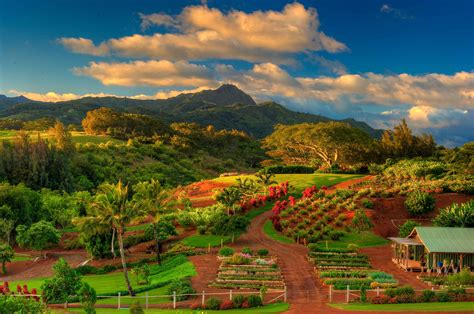 farm and garden photo a tropical community garden and farm in hawaii