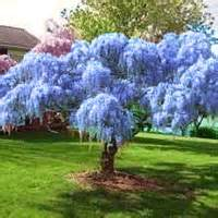 trees shrubs buy at nature nursery