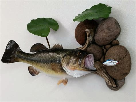 large mouth bass skin mount taxidermy insider