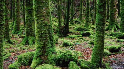 eating moss    health benefits