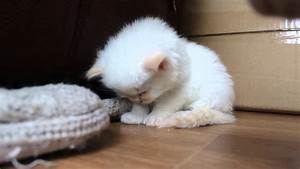 Image Gallery exhausted kitten