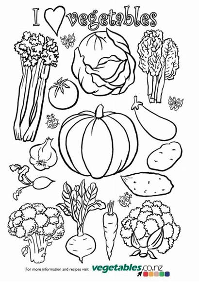 Colouring Activities Vegetables Children Both Holiday Under