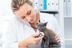 How Modern Technology is Improving Veterinary Care - Miss ...