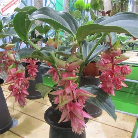 piante da interno con poca luce piante da interno con poca luce capelli piante da