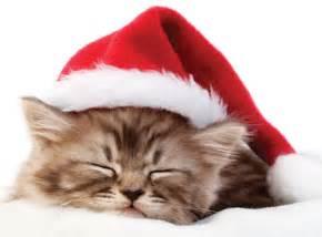 santa cat 12 santa cats that will make you smile meow meow