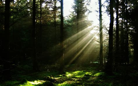 forest sun rays nature wallpapers hd desktop