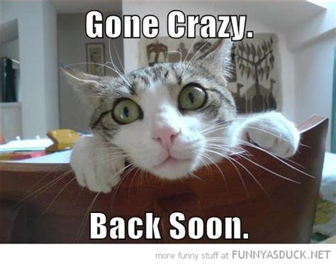 Crazy Cat Memes - some animals are crackers 171 silly weird crazy cute animals 171 page 13