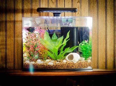 reviewing  types  fish tank filters esmart buyer